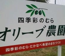 オリーブ農園(高鍋町)