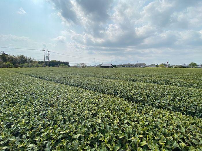 甲斐製茶建植サイン(川南町)